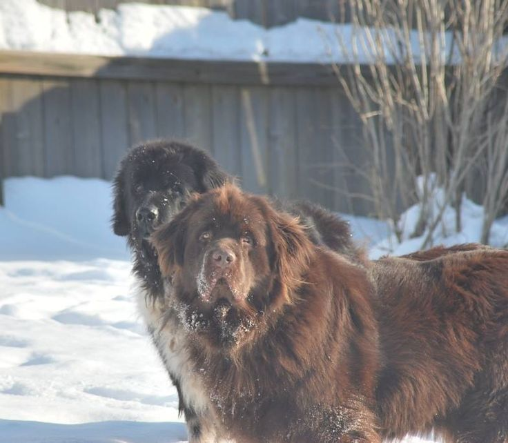 FOX45 Dayton's Dogs of the Day - Chewie and Molson