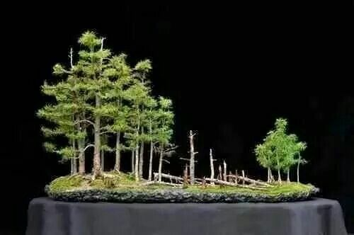 Bonsai natural forest