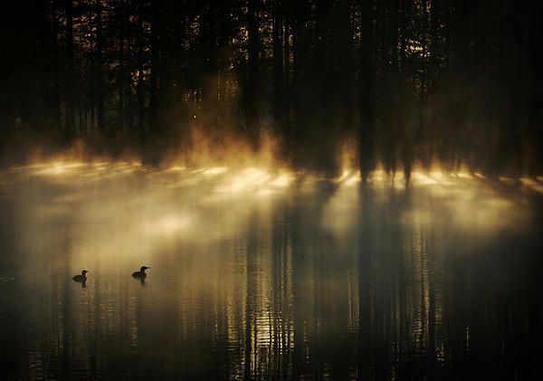 Foggy lakescenery in a forest in Finland - prints for sale