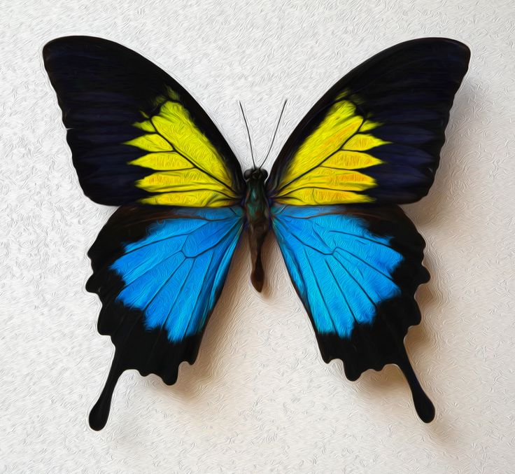 Blue Primary Colors Custom Re Coloring Concept Butterfly