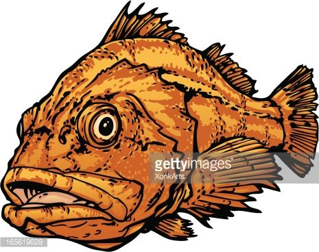 Yellow Eyed Rockfish Vector Art | Getty Images