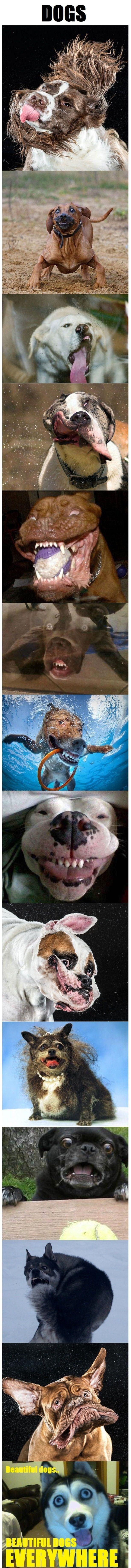 Dogs - www.meme-lol.com