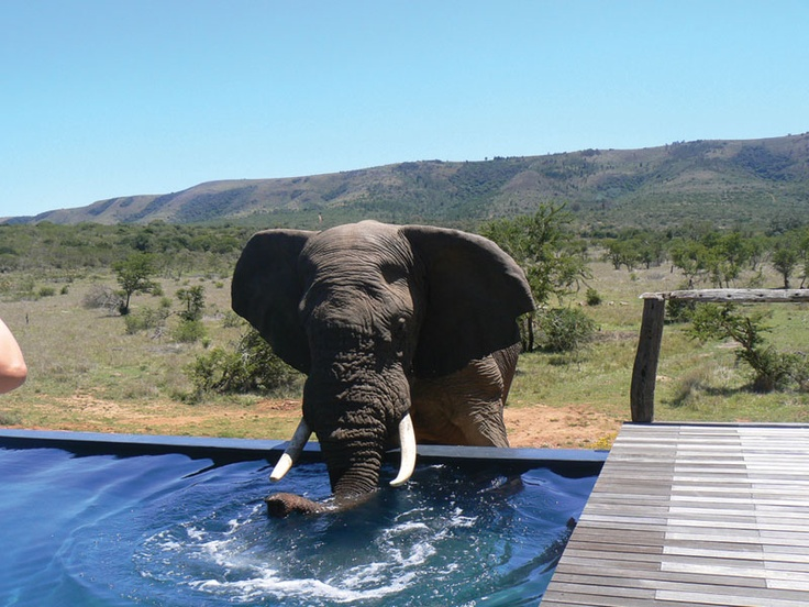 Dip in the pool overlooking the wildlife at African Pride Pumba Private Game Reserve