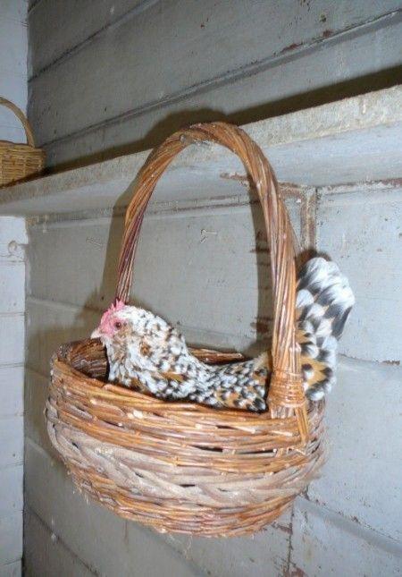 Basket Hanging Nest cute idea, cheap baskets at thrift shops
