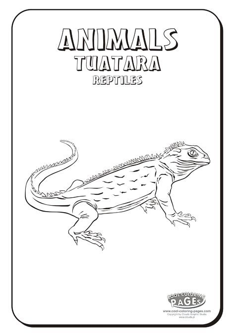 16 best Tuatara images on Pinterest Reptiles Lizards and New