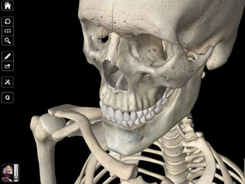 15 Best Skeletal System Images On Pinterest Skeletal System