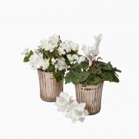 Květinová aranžmá | Alkor