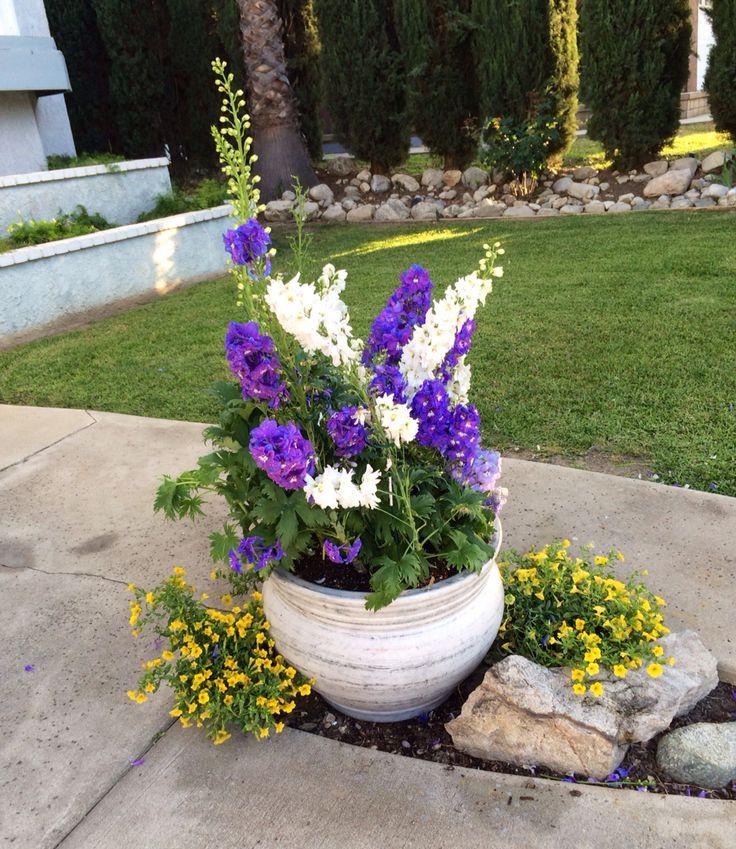 Delphinium container garden   Container Gardening