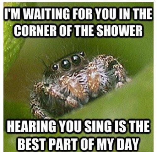 40dffc5e0d71d8fb02facea616379dcf house spider spider meme 14 best misunderstood spider memes images on pinterest,Misunderstood Spider Meme