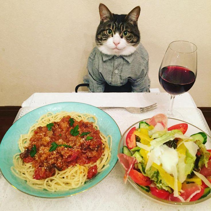 ジビエのミートスパゲティ Spaghetti Bolognese #cat#cats#catstagram#catsofinstagram ##bestmeow#picneko#sweetcatclub #ねこ#にゃんこ#ニャンスタグラム#みんねこ #みんなのねこ部#ペコねこ部#ネコ#ねこ部 #猫#spaghettibolognese#ミートスパゲティ #redwine#赤ワイン#salad#シーザーサラダ #mannishboys#斉藤和義#zip写真部