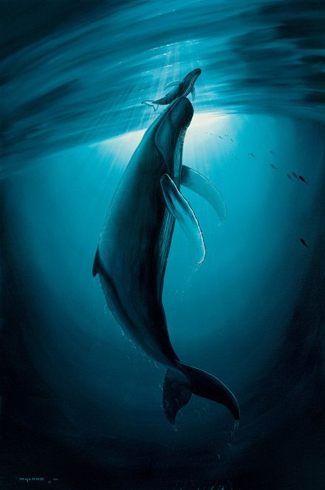 First Breath, Wyland Galleries, Giclee on Paper, Ltd Edition Hand Signed #279/395, 30in. x 40in.