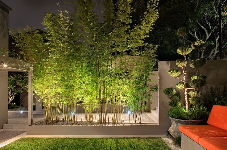 Uplighting on Bambusa sp. + feature Juniperus 'Cloud Tree' in pot. In-ground deck lighting in background. Bellevue Hill, NSW Australia. Anthony Wyer + Associates www.anthonywyer.com