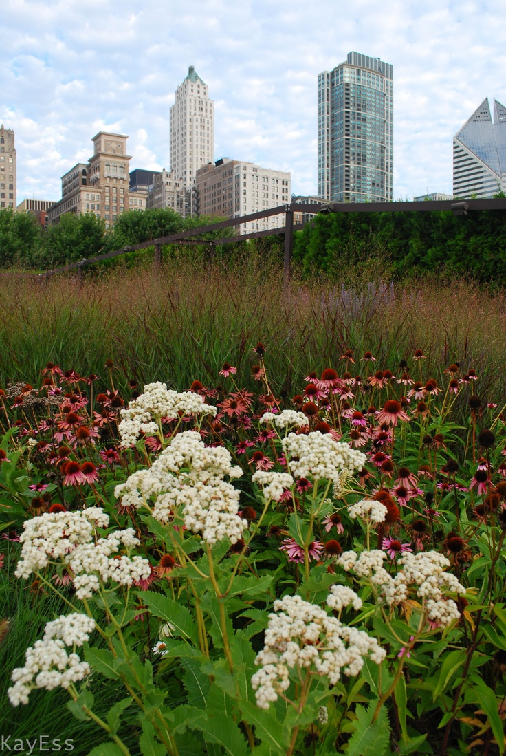 52 best lurie garden images on pinterest yard design for Landscape design chicago