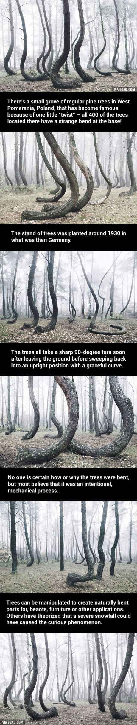 Mysterious Forest Of 400 Crooked Trees In Poland Is Still A Mystery For Scientists (Photos by Kilian Schönberger)