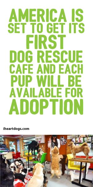 America Is Set To Get Its First Dog Rescue Cafe And Each Pup Will Be Available For Adoption!