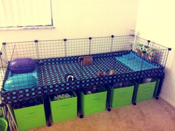 15 Top C&C Cage Designs for your Guinea Pigs