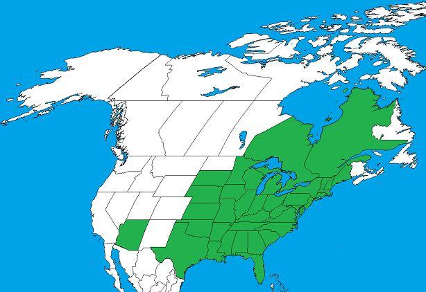 Eastern Poison Ivy Range - Toxicodendron radicans - Wikipedia