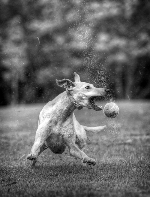Best Shutterspeed To Use For Dog Photography