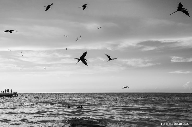 Peaceful in Holbox island  #josafatdelatoba #cabophotographer #landscapephotography #mexico #holbox #quintanaroo #peaceful #birds