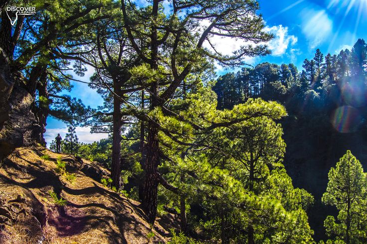 La belleza de los montes de La Palma.