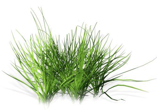 grass (6).png
