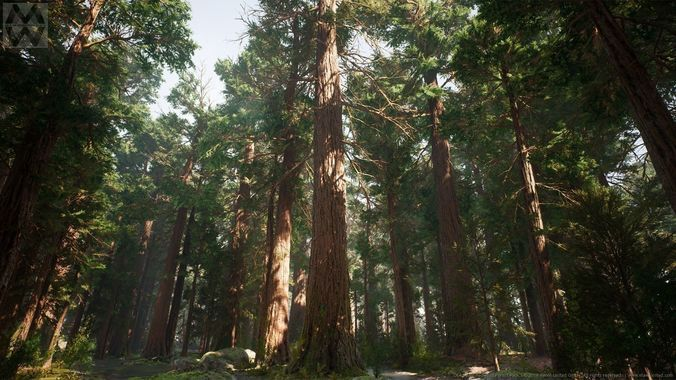 ue4 - redwood forest pack 3d model low-poly animated uasset