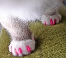 38 Best Cat Nail Caps Images On Pinterest Cat Nail Caps