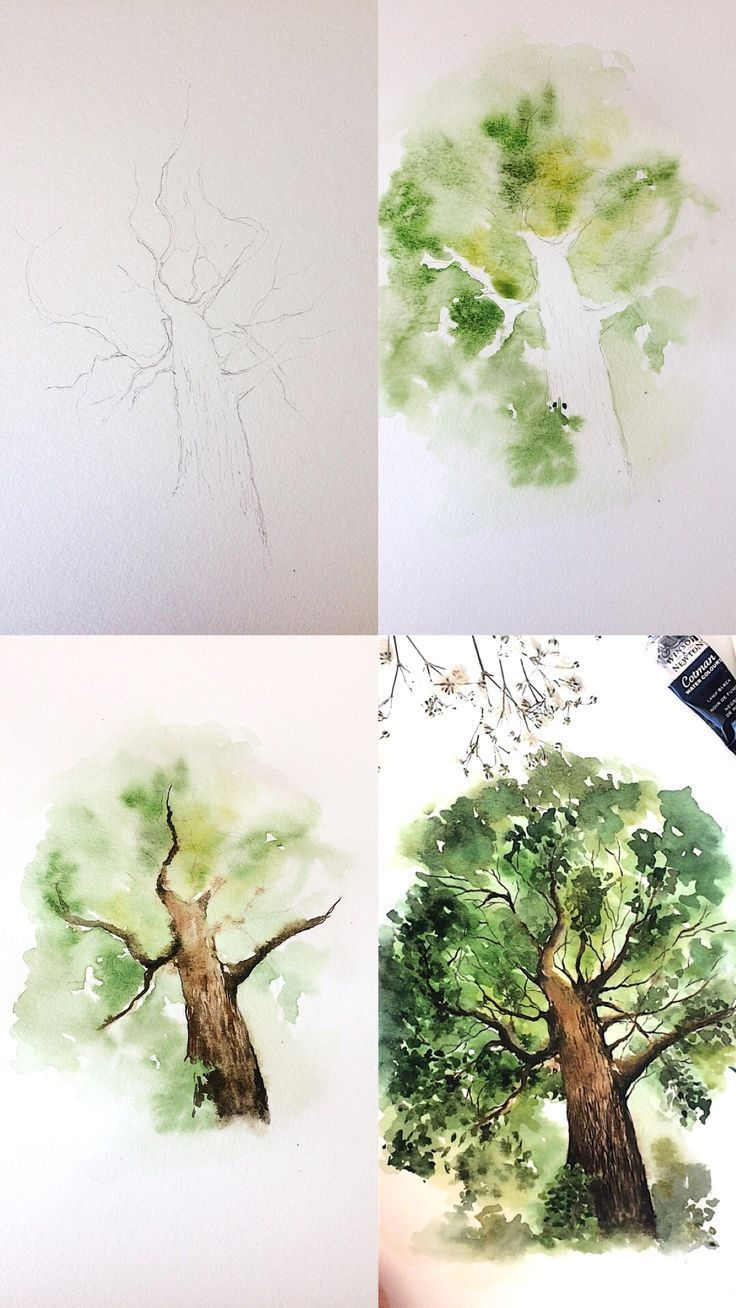 Pictures For Tracing For Beginners And Advanced Watercolor Art