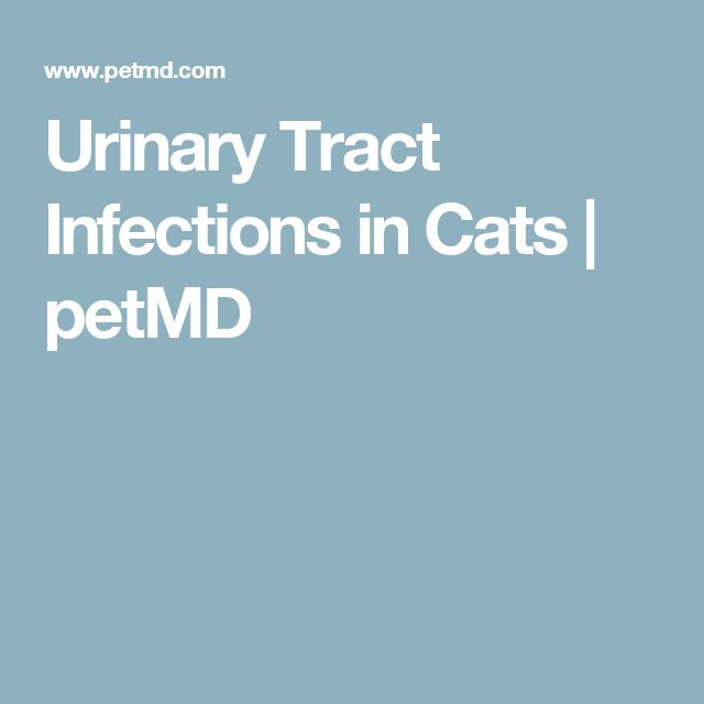 17 best ideas about urinary tract infection on pinterest uti remedies health remedies and. Black Bedroom Furniture Sets. Home Design Ideas