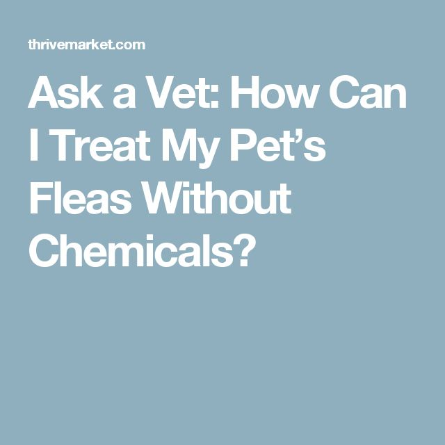 Ask a Vet: How Can I Treat My Pet's Fleas Without Chemicals?
