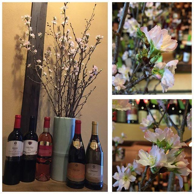 【glouglou_wine】さんのInstagramをピンしています。 《#本日より営業しております #一足も二足もはやい #春がやってきた #山形県東置賜郡高畠町藤庄園産 #啓翁桜 #けいおうさくら #桜 #sakura #桜が散った後 #葉桜も楽しめます #愛でにいらしてください #山形のワイン #高畠ワイン #日本のワイン #京都#kyoto#壬生 #mibu #ワイン #wine #ワイン販売》