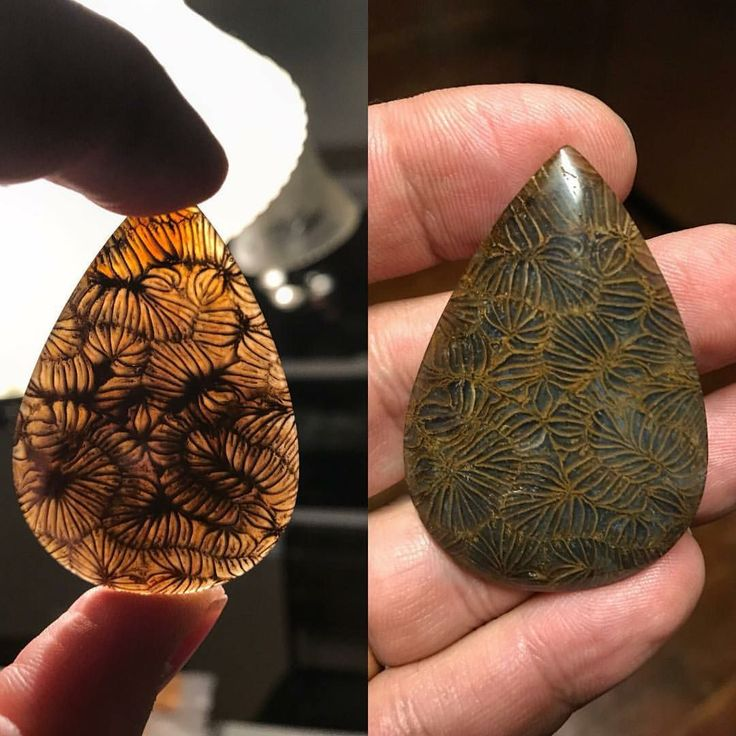 Fossil coral from Indonesia! Highly agatized! Rare coral! Photo: davidhunter01 Geology Wonders