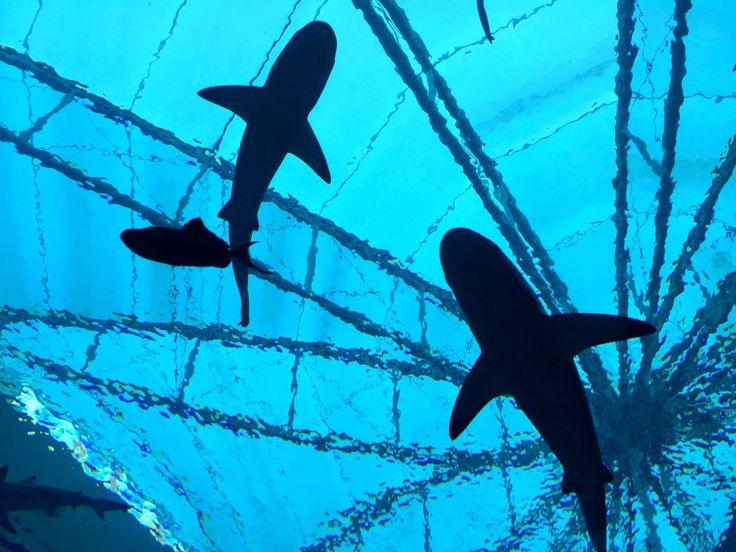W tunelu z rekinami, czyli Sea Aquarium w Singapurze