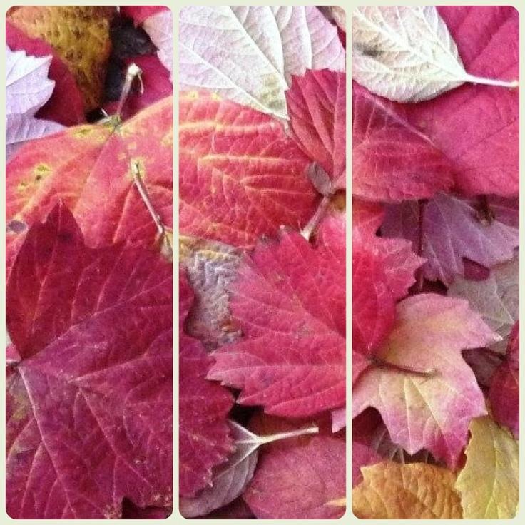 Fallen red leaves - swizterland Nov 2012