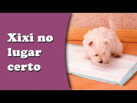 Como ensinar o cachorro a fazer xixi e suas necessidades no lugar certo - YouTube