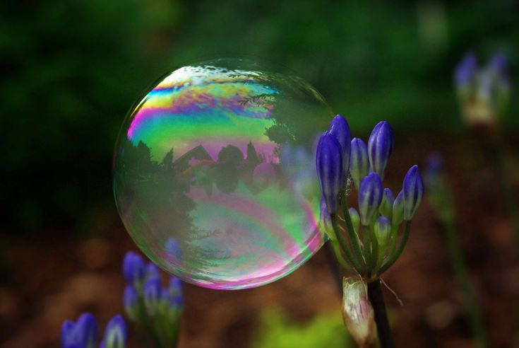 #abstract #background #ball #blow #bubble #cloud #colorful #fantasy #float #forest #make soap bubbles #sky #soap bubble #summer #weightless