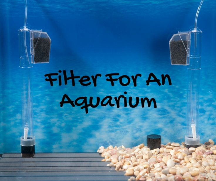 We provide you with fully fledged installations in which everything would be included. We provide a fully automated system that feeds fish at regular intervals and operates lighting. Our team of experts will do a water change regularly. #RentAquarium, #RentanAquarium, #AquariumLondon, #LondonAquarium, #London http://rentaquarium.co.uk/about-us/
