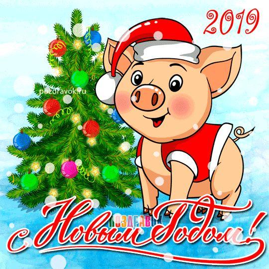 Год свиньи, кабана 2019! Свинья, поросенок, свинка, кабан ...