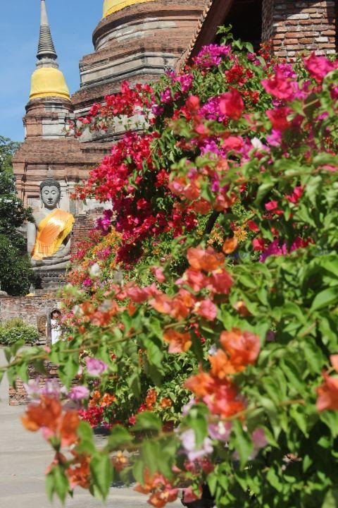 """Phra Nakhon Si Ayutthaya"" Fotografía digital. 2015 #buddha #buda #ayutthaya #thai #tailandia #fotografia #foto #photography #templo #temple"