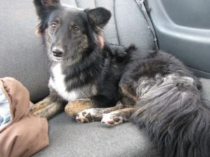 Date Listed 13-Jul-13 Price Please contact Address Grande Prairie, AB, Canada  View mapr > Ad ID 503489360 I lost my dog around 12am Friday (July 12th)night in the downtown Grande Prairie area. She is mostly black with brown legs and white paws. She has a blue collar on but no tags. Answers to the name Kale. She is very friendly and would come right over to you whe
