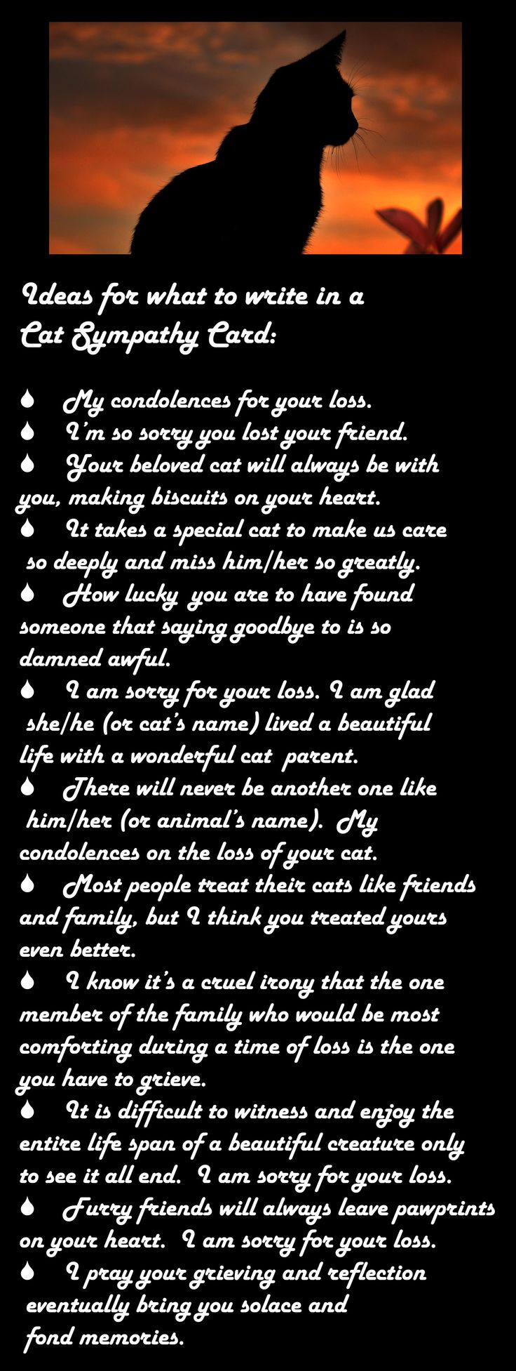 Ideas for what to write on a cat sympathy card.