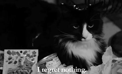"""Henri, Le Chat Noir In """"The Worst Noel""""  """"I regret nothing."""""""