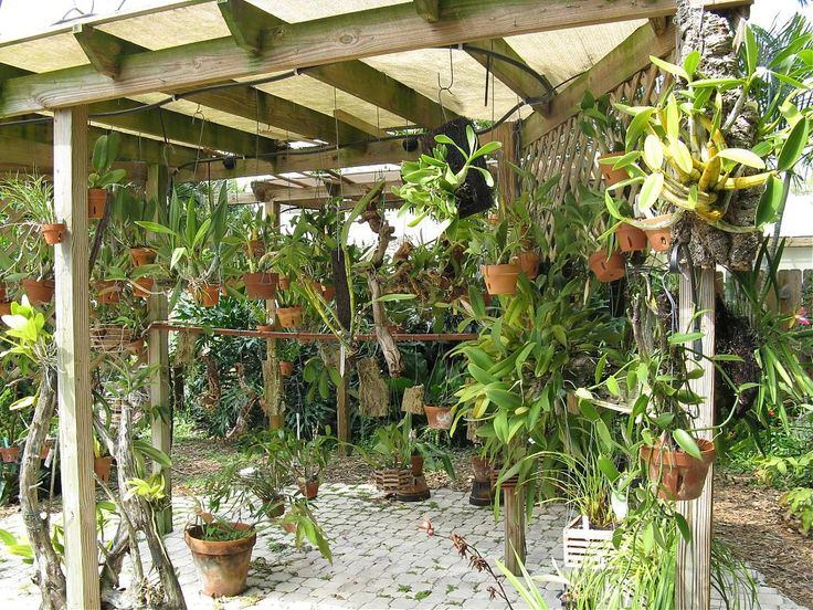 Orchid Mounting Ideas | Growing orchids outside in Ft Lauderdale-img_11481.jpg