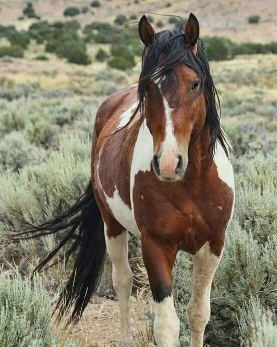 Wilde Pferde | TheSpectrumWorksh … • Von den Abenteuern des Lebens inspirierte Drucke und von Künstlern entworfene Waren