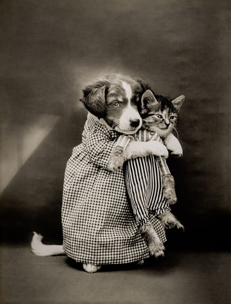The Nurse with Cats (and Dogs), photographed by Harry Whittier Frees, June 24, 1914. Photograph shows a puppy holding a kitten.