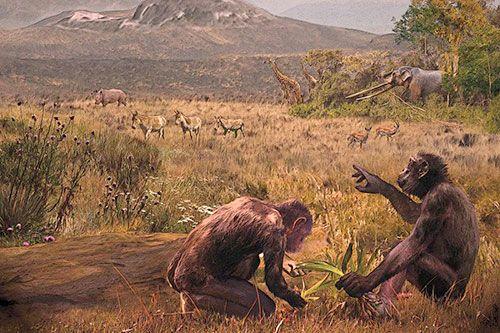 Graecopithecus  dans son environnement il y a 7 millions d'années en Eurasie