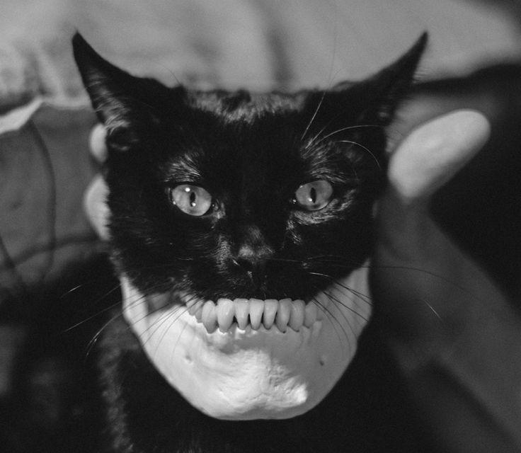 Черные коты страшные картинки
