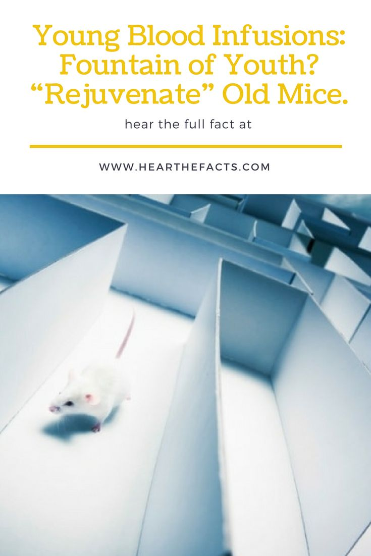 """Young Blood Infusions """"Rejuvenate"""" Old Mice. http://tinyurl.com/leuwtmb"""