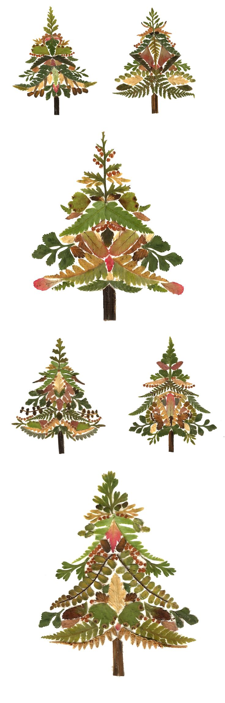 A Fern Christmas | Helen Ahpornsiri Illustration