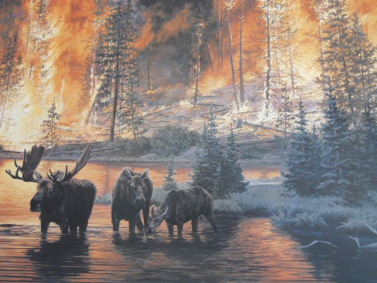 Jim Tschetter Legacy Moose in Water Quietly Fleeing 1988 Yellowstone Fires 25x34 | eBay